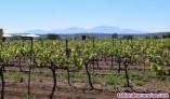 Fotos del anuncio: Finnca de viñedos olivares y algorrobos