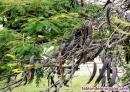 Fotos del anuncio: Finca con olivos, viñedos, algarrobos y pequeño almacén