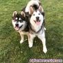 Fotos del anuncio: Adiestramiento de perros en Vizcaya