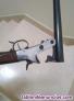 Fotos del anuncio: Vendo escopeta calibre 24 marca fama