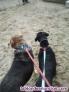 Fotos del anuncio: Cuidadora y paseadora de perros