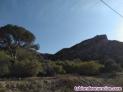 Fotos del anuncio: Finca de regadío y terreno 1 hectárea  15 terreno montuoso