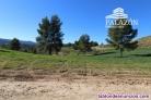 Fotos del anuncio: Ref: 0291. Finca de caza en venta en Letur (Albacete)