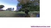 Fotos del anuncio: 2 FINCAS EN MUÑÓ, a 20 minutos de GIJÓN, a 10 de POLA DE SIERO