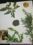 Fotos del anuncio: Los secretod de las plantas