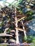 Fotos del anuncio: Cultivador rosco con 8 brazos