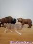 Fotos del anuncio: Colección de Animales de juguete marca Schleich