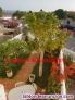 Fotos del anuncio: Vendo chalet  fantastico, urbanización del Medano cerca mejor playa natural