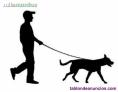 Paseador de Perros Profesional