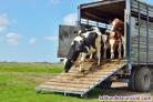 Curso de bienestar animal en el transporte, matadero y explotación ganadera