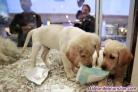 Curso de bienestar animal en nucleos zoologicos