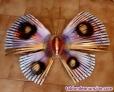 Fotos del anuncio: Mariposa japonesa de bambu