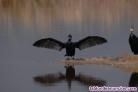 Fotos del anuncio: Safari fotografico
