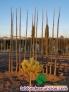 Fotos del anuncio: Paulownia para jardín, veredas, avenidas