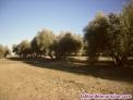 Fotos del anuncio: Camino de arjona a andujar km 1.5