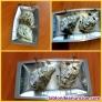 Fotos del anuncio: Pareja de ostras naturales con elegantes servidores de nácar sobre bandeja de pl