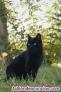 Fotos del anuncio: Kichiro, gato en adopción