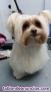 Fotos del anuncio: Peluqueria Canina