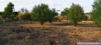 Fotos del anuncio: Venta de terreno en Paterna (La Pinaeta)